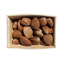 Les coquillages : vernis