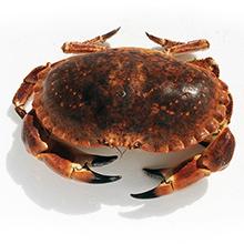 Les crustacés de qualité : Tourteau / Crabe / Dormeur
