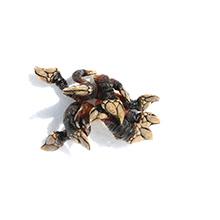 Les crustacés de qualité : Pousse pied