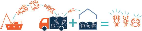 Provenance de crustacés par vivier - Assurance d'un produit frais - Thaeron France