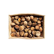 Les coquillages : amandes
