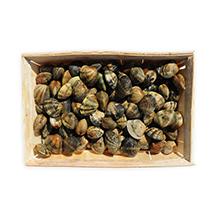 Les coquillages : palourdes