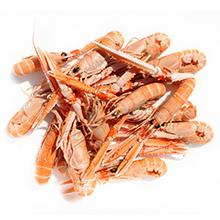 Les crustacés de qualité : Langoustine